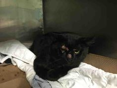 VANCE - A1089632 - - Brooklyn  ***TO BE DESTROYED 09/17/16***This cute black male stray is around 3 years old, though in another part of the description, he's referred to as 5 years old. His name is VANCE, though later in his description he's referred to as VENDETTA. This handsome fellow was taken off the street and brought to the shelter in hopes of a fur-ever home. But time is running out for VANCE. He will be killed tomorrow if he's not rescued! VANCE is very afrai