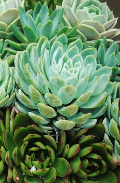 Succulent plant at Roger's Gardens in Newport Beach, Ca. Photo by Jana Magnuson