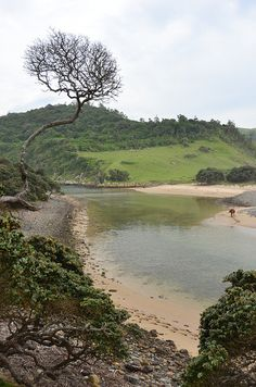 Coffee Bay is a small community on Wild Coast, Eastern Cape Province, South Africa.