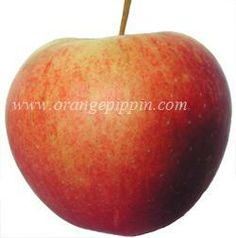 Gala One of the most widely-grown apple varieties, with a sweet pleasant flavour, and good keeping qualities.