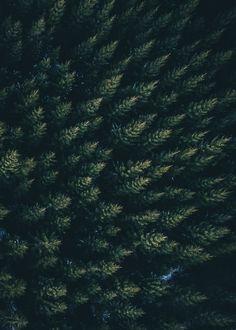 Forestbound - ART