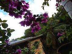 Barbados Wildlife Refuge, Saint Peter, Barbados