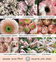 Blush wedding flowers, pink wedding flowers, and lime details create a distinct color palette featuring spring wedding flowers. Colorful Flowers, Beautiful Flowers, Cut Flower Garden, Garden Roses, White Clematis, Coral Charm Peony, Parrot Tulips, Flower Names, Bodas