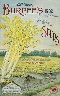 ❤ Vintage Art Seed Label Poster Print! ☮~ღ~*~*✿⊱ レ o √ 乇 !! - Victorian Style.