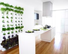 Looking for a living wall or vertical garden system to screen your balcony while you grow veggies, fresh aromatic herbs, or flowers either indoors or out? The modular system is great for creating a small green wall or larger vertical garden on the terrace or in the kitchen.