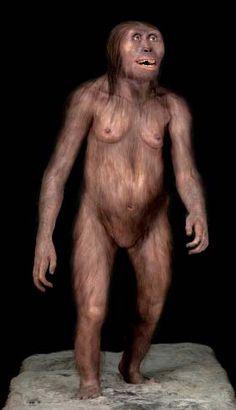 Reconstrucción de Australopithecus Afarensis (Lucy)- Reconstrucción artística de Lucy -Australopithecus afarensis- en el Museo de la Evolución de Burgos
