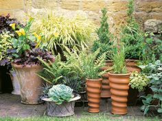 Ornamental grasses in rustic pots, topiary in a Versailles tub