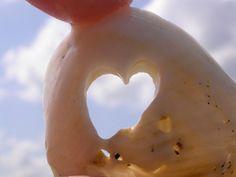 Sea worn heart in a seashell found on Venice Beach, Florida