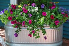 Great combination of petunias, verbena, Euryops (Bush Daisy), and Lobelia Flower Containers, Metal Containers, Container Plants, Container Gardening, Potted Flowers, Outdoor Flowers, Flower Planters, Potted Plants, Garden Planters