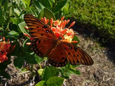 Backyard Nectar Hunt by The Rocketeer, via Flickr