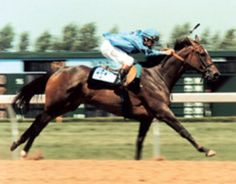 Glorious Song. Major Wins: Belle Mahone Stakes (1979)  Canadian Maturity Stakes (1979)  Maple Leaf Stakes (1979)  Dominion Day Stakes (1980, 1981)  La Canada Stakes (1980)  Santa Margarita Handicap (1980)  Top Flight Handicap (1980)  Michigan Mile And One-Eighth Handicap (1980)  Spinster Stakes (1981)  Santa Maria Handicap (1981)  Awards  Canadian Champion Older Female Horse (1980, 1981)