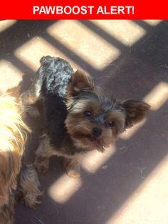 Please spread the word! Petunia was last seen in Arlington, TX 76001.    Nearest Address: 4200 Highgrove Drive, Arlington, TX, United States