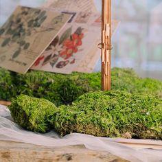 Preserved Short moss pole moss Natural Green 20x50cm for DIY image 3 Moss Centerpieces, Card Box Wedding, Wedding Ideas, Gift Card Boxes, Moss Terrarium, Moss Wall, Cute Frames, Moss Garden, Beautiful Fairies