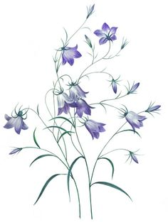 Plant Lore: Bluebell
