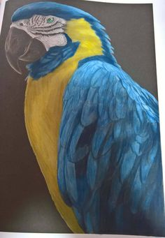 Macaw By Nathalie Reinbold
