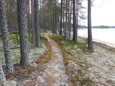 Suomujärven kierros, Patvinsuo, Pohjois-Karjala, 2015