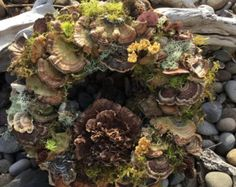 Woodland Turkey Tail Wreath, Front door, Mushroom, Forest Rose - Edit Listing - Etsy