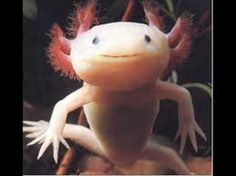 deep sea creatures - Google Search