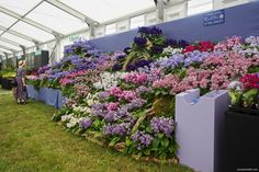 Sussex Gardens, Stuff To Do, Things To Do, Buy Plants, Garden Show, Saving Ideas, Days Out, Surrey, Hampshire