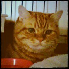 seventies cat @truedragonfly-#cameran #cameranapp