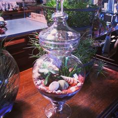 Apothecary Jar with succulents at Oddyssea