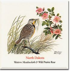 Image result for north dakota state bird