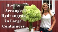 Kelly Lehman: How to Arrange Hydrangeas in Large Containers