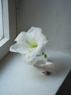 Kauniisti Kotimainen / Ritarinkukka / ida365.fi Lifestyle, Plants, Plant, Planets