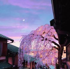 Pink Sunset, Kyoto, Location History, Grand Canyon, Shit Happens, Adventure, World, Twitter, Anime