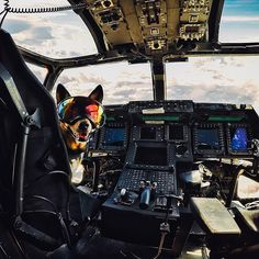 Abbie the Guinness World Record Surfing Dog gets special treatment at the Osprey Squadron at the US Marine Corps Air Base in Miramar, San Diego, CA. Gopro Camera, Gopro Video, Video Camera, Gopro Action, Action Photography, Military Dogs, Us Marine Corps, Guinness World, Animales