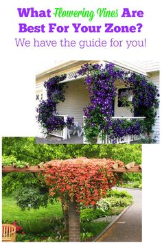 What flowering vines are best for your zone?  We have the guide for you.  http://www.hometalk.com/l/VTO