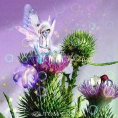zodiac aries flowers fairy faery fairies fae Aries ©Tom CrossAries©