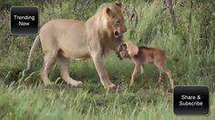 Amazing!! Animal Saves Another Animal   Animal Heroes 2017 HD