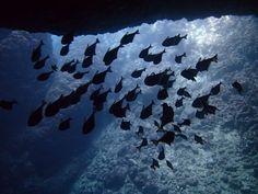 とってもきれいな海で最高でしたね~^^! - http://www.natural-blue.net/blog/info_6001.html