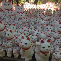 Kitty heaven at Gohtokuji, Tokyo | Candyflossoverkill.com