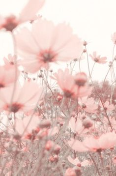 Iphone Wallpaper - Parures Housses de Couette Floral - Iphone and Android Walpaper Aesthetic Pastel Wallpaper, Aesthetic Backgrounds, Aesthetic Wallpapers, Nature Wallpaper, Summer Flowers, Pink Flowers, Beautiful Flowers, Pink Summer, Pink Petals