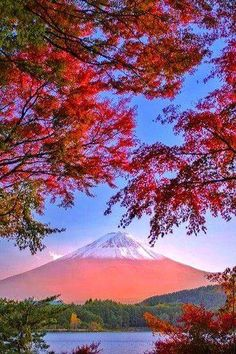 Beautiful Mont Fuji in autumn (Picture found on beauty of Japan) Beautiful World, Beautiful Places, Beautiful Pictures, Places Around The World, Around The Worlds, Mount Fuji Japan, Monte Fuji, Thinking Day, Japan Travel