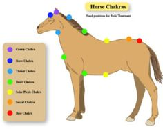 Horse Equine Chakra Printable Chart Reiki Hand Positions Energy Healing Vortexes Therapy  Energy System