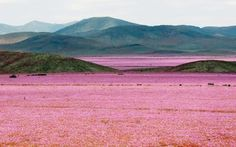 The Atacama Desert