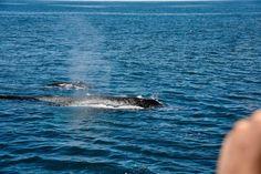 Australien 2016 - Die Ostküste nach Byron Bay