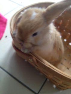 .. Rabbit, Bunny, Animals, Rabbits, Cute Bunny, Animales, Animaux, Bunnies, Animal