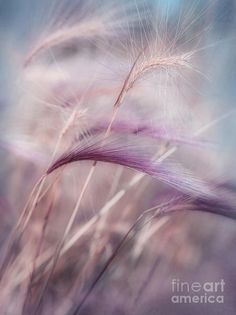 and her journey continues., simply-beautiful-world: Whispers in the Wind Simply Beautiful, Beautiful World, Beautiful Flowers, Terre Nature, Poesia Visual, Shades Of Purple, Plum Purple, Lilac, Burgundy