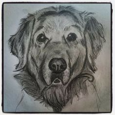 Golden retriever pet sketch - Tuli portrait 🐶; CVale