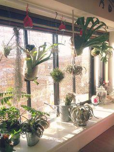しゅうさんが投稿した画像です。他のしゅうさんの画像も見てませんか?|おすすめの観葉植物や花の名前、ガーデニング雑貨が見つかる!GreenSnap(グリーンスナップ)
