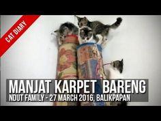[Cat Diary] : Ndut Family - Manjat Karpet