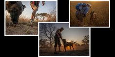 a short intro into an amazing group of people who train problem domestic dogs to help with conservation