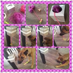 Another cute project to keep a dog entertained