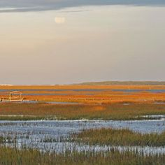 24 Best Wadmalaw Island Images On Pinterest Southern