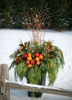 Gorgeous winter container garden incorporating fruit! #gardening #winter #Christmas