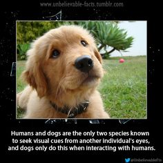 Humans and dogs are the only two species known to seek visual cues from another individuals eyes, and dogs only do this when interacting with humans.